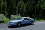 Old Blue in the Pines fixed.jpg